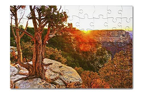 Grand Canyon National Park Arizona - Beautiful View with Cactus at Sunset A-9013746 8x12 Premium Acrylic Puzzle 63 Pieces