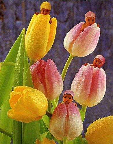 Ceaco Anne Geddes Tulip Baby Jigsaw Puzzle 550-Piece
