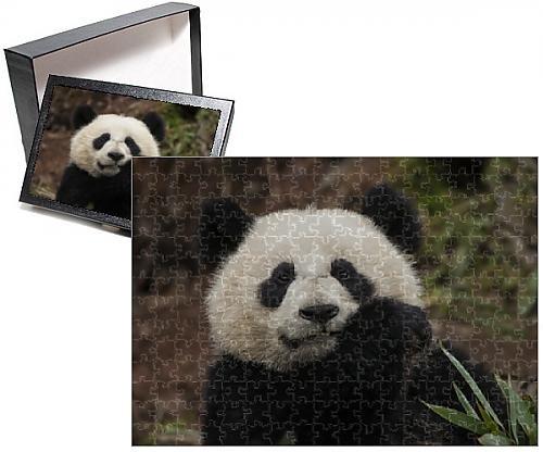 Photo Jigsaw Puzzle of China Chengdu Chengdu Panda Base Close-up of young giant panda